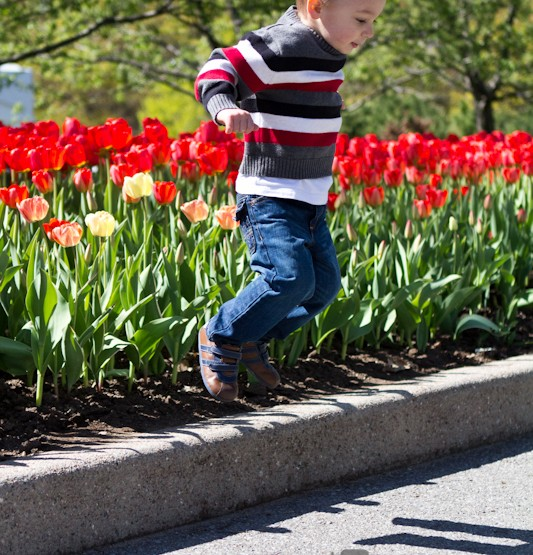 {Tulip time!} Ottawa Family Photographer