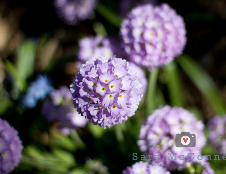 Ornamental Gardens - Ottawa Family Photographer