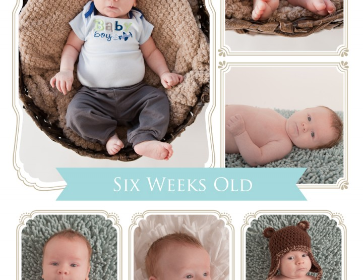 Six weeks old ~ Ottawa Baby Photographer