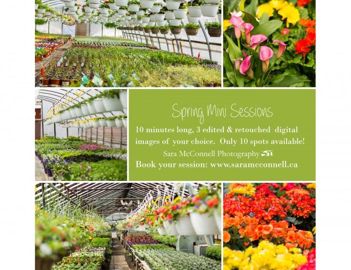Book Your Greenhouse Spring Mini Session ~ Ottawa Photographer