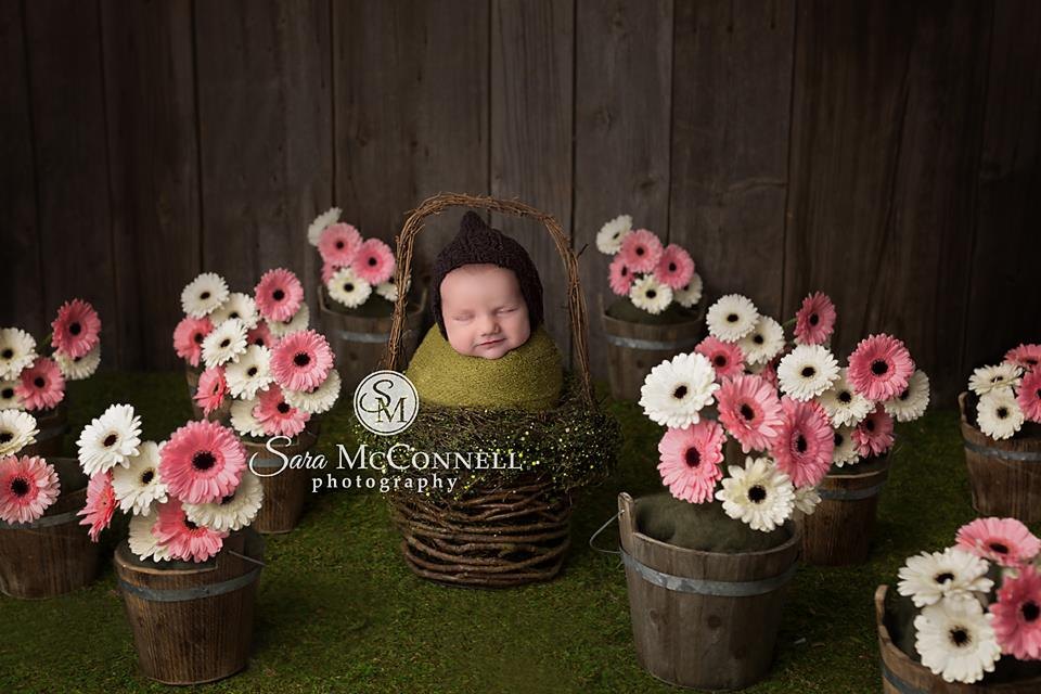 ottawa newborn photos (6)