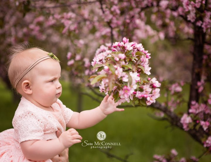 Spring Photos in Ottawa: Blossom Sessions