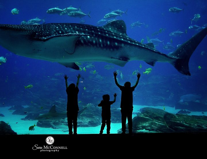 Persistence, hope, and whale sharks | Ottawa Photographer