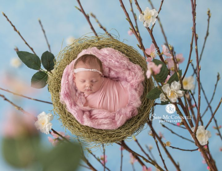 Ottawa Newborn Photographer | The Colours of Spring