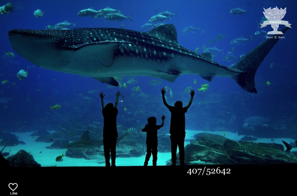 children looking at whale shark