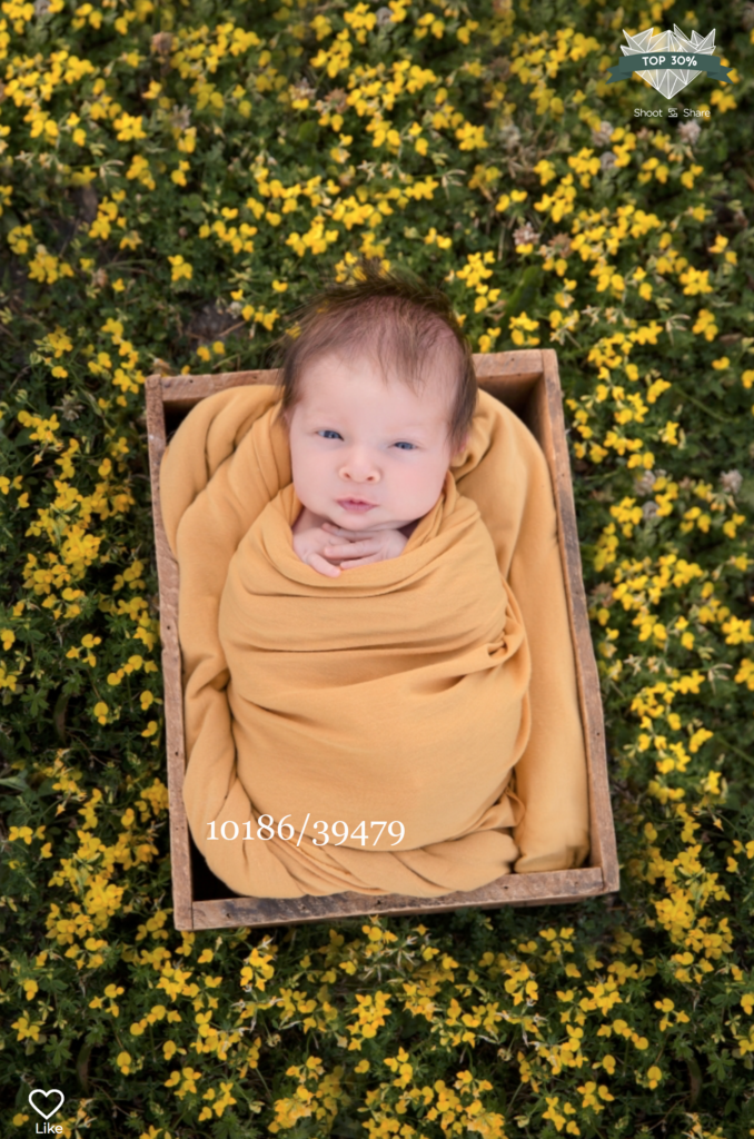 baby wrapped in yellow in a wooden box sitting in a field of yellow flowers