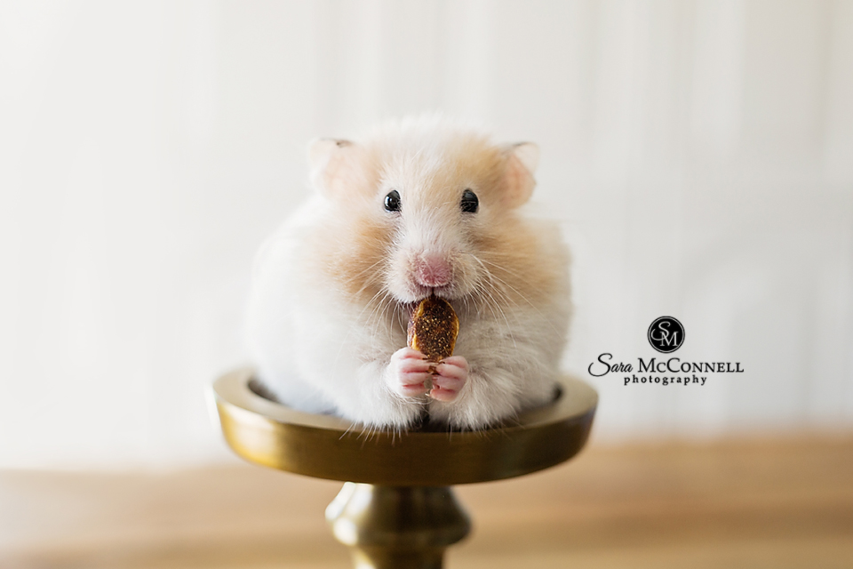 hamster sitting on a candle holder