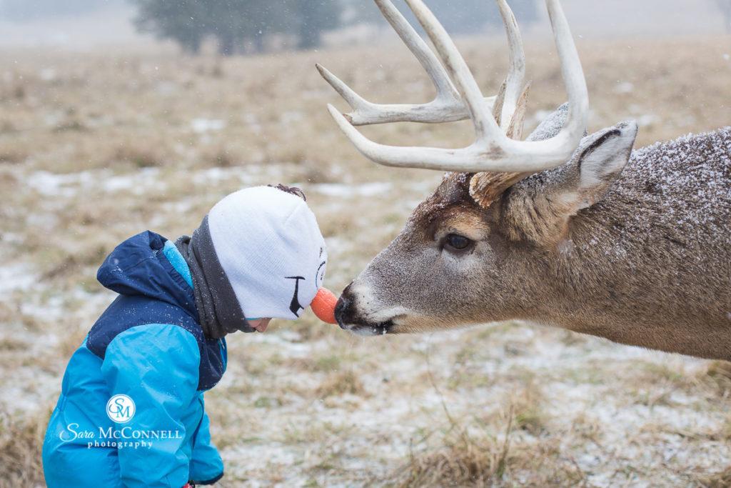 deer at parc omega