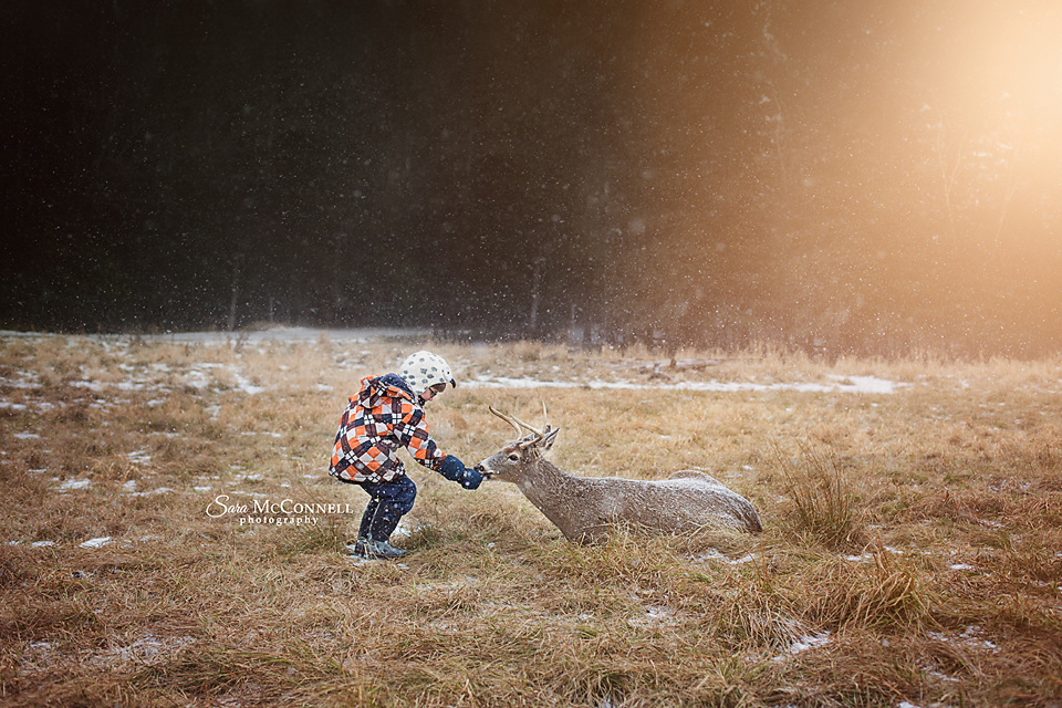 little boy feeding a deer at parc omega