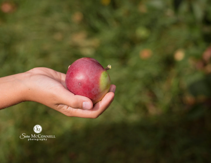 Taking photos at the apple orchard | Ottawa Family Photographer