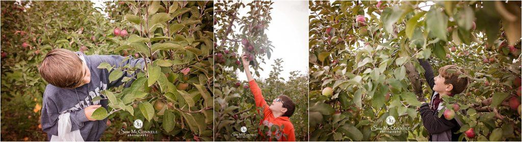 boys apple picking