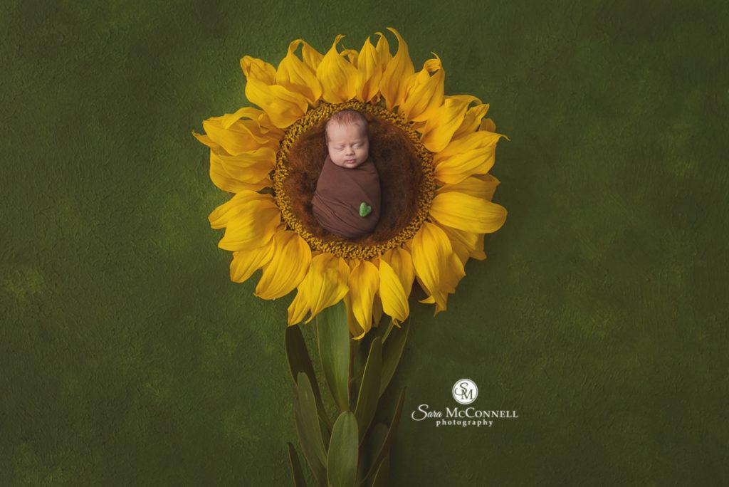newborn baby in a sunflower