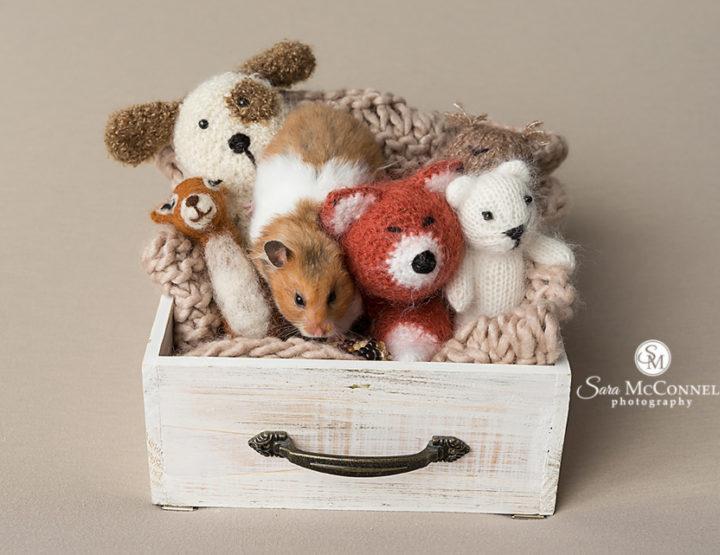 Hamster day?   Ottawa Photographer